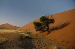 drzewo pojmanych piasku. Fotografia Royalty Free