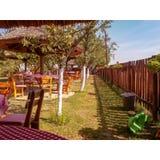 drzewo pola zdjęcie royalty free