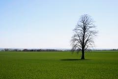drzewo pola Zdjęcia Royalty Free