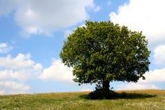 drzewo pola Obrazy Royalty Free
