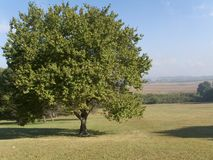 drzewo pola zdjęcie stock