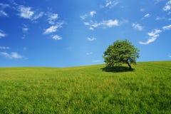 drzewo pola Fotografia Stock