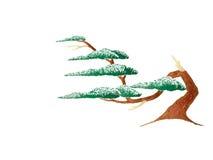 drzewo powyginany wiatr Obrazy Stock