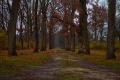 Drzewo prążkowana ścieżka Fotografia Stock