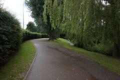 Drzewo prążkowana droga przemian z trawy krawędzią Obraz Royalty Free