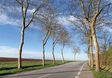 Drzewo prążkowana droga w Francja Zdjęcie Royalty Free