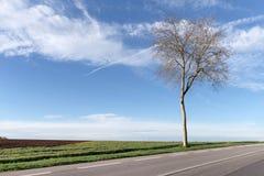 Drzewo prążkowana droga w Francja Zdjęcia Stock