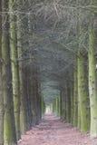 Drzewo prążkowany korytarz Zdjęcie Royalty Free