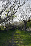 Drzewo prążkowana ścieżka Zdjęcia Royalty Free