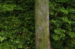 Drzewo Przeciw liścia tłu Zdjęcia Stock