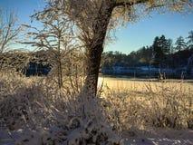 Drzewo przed jeziorem w zmierzchu Obrazy Royalty Free