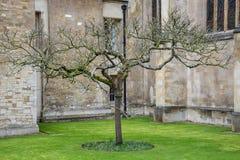 Drzewo przed królewiątko szkoły wyższa budynkiem w Cambridge z chmurnym zdjęcia royalty free