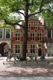 Drzewo przed monumentalnym budynkiem Zdjęcia Royalty Free