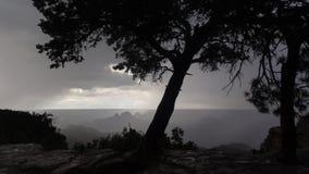 Drzewo przez słońce promienia Zdjęcia Royalty Free