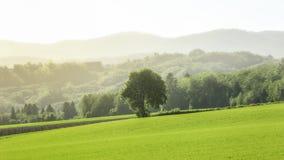 Drzewo przy łąką obraz stock