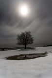 Drzewo przy blaskiem księżyca Zdjęcie Royalty Free