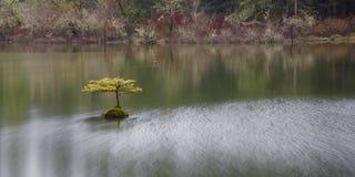Drzewo przy Czarodziejskim jeziorem, Portowy Renfrew, BC, Vancouver wyspa, BC obraz stock
