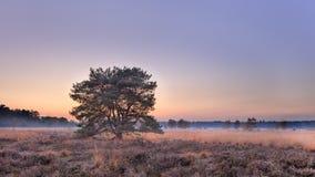 Drzewo przy jesień zmierzchem przy upał ziemią holandie Zdjęcie Stock