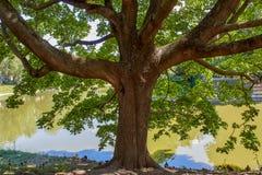 Drzewo przy jeziorem z kaczkami obrazy stock