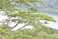 Drzewo przy jezioro stroną zdjęcie stock