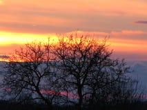 Drzewo przy półmrokiem zdjęcia stock