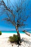 Drzewo przy plażą obrazy stock
