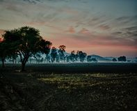 Drzewo przy puszkiem z mgiełką w uprawy polu fotografia stock