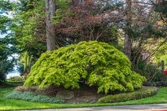 Drzewo Przy Seward parkiem obrazy royalty free