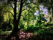 Drzewo przy Staten Island Fotografia Royalty Free