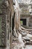 Drzewo przy Ta Prohm obrazy royalty free