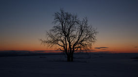 Drzewo przy świtem Obraz Royalty Free