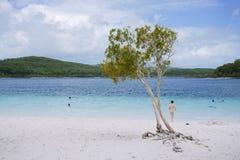 Drzewo przy wspaniałym słodkowodnym jeziorem zdjęcia stock