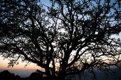 Drzewo przy zmierzchem Fotografia Stock