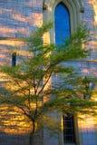 Drzewo przy zmierzchem fotografia royalty free