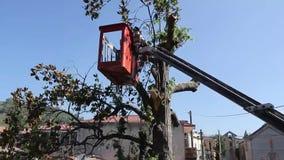 Drzewo przycina i piłuje mężczyzną z piłą łańcuchową, stoi na platformie machinalny krzesła dźwignięcie zbiory wideo