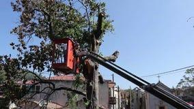 Drzewo przycina i piłuje mężczyzną z piłą łańcuchową, stoi na platformie machinalny krzesła dźwignięcie zdjęcie wideo