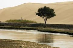 drzewo pustynna woda Zdjęcie Stock