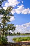 Drzewo r na banku mała rzeka zdjęcia royalty free