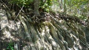 Drzewo r na kamieniach zdjęcia stock