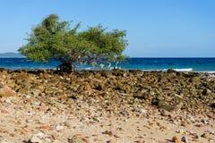 Drzewo r obok plaży obraz stock