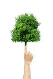 Drzewo r od palca Obraz Royalty Free