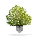 Drzewo r z żarówki - zielony energetyczny eco pojęcie Fotografia Royalty Free