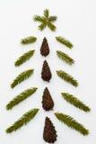 Drzewo robić jodeł gałąź i jedlinowi rożki Zdjęcia Royalty Free