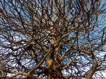drzewo rozgałęziony zdjęcie royalty free