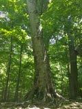 Drzewo rzeźbiący z listami miłość Fotografia Royalty Free