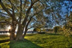 drzewo słońca Zdjęcie Stock