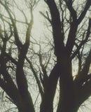 drzewo słońca Obrazy Stock