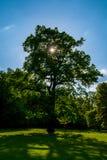 Drzewo słońce obrazy stock