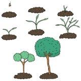 drzewo sadzonek ilustracji