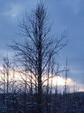 Drzewo set fotografia royalty free